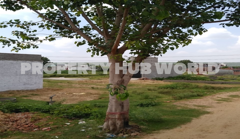 only for sale plots