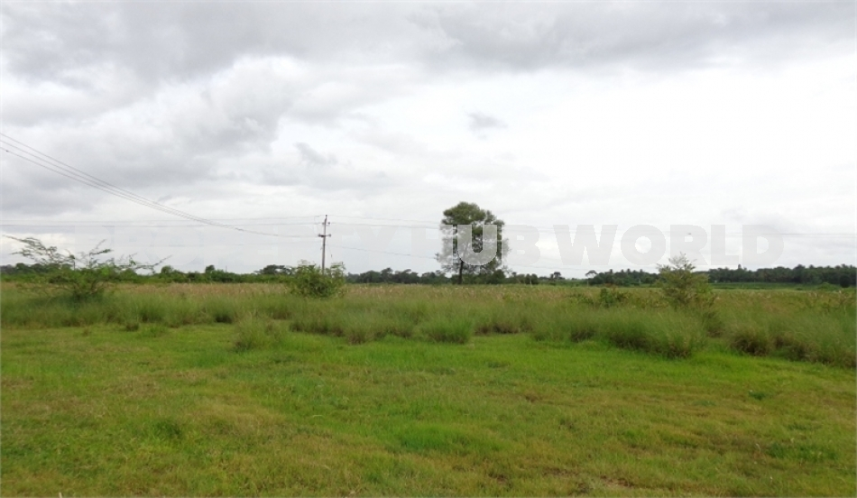 Non Agriculture land Available For Sale in Panchi Dholera SIR, City Center Zone