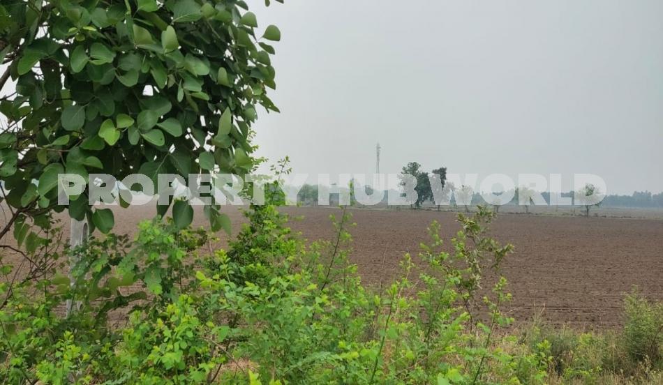 112 vingha agriculture land nr dabhoi, vadodara in Vadodara