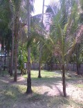 17cent residential land for sale in Munnamkutty,Kayamkulam,Alappuzha